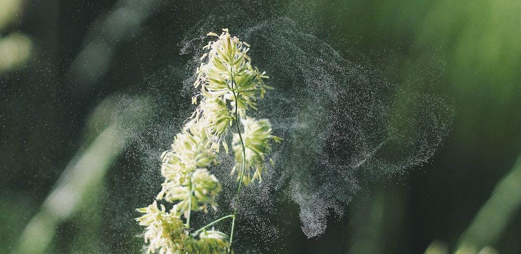 Remedios caseros alergia